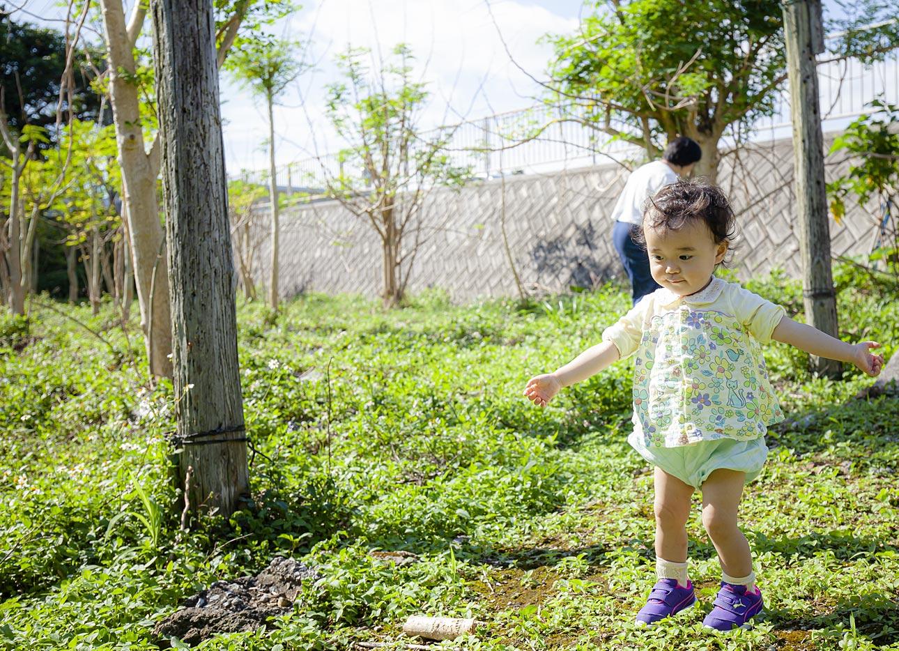 沖縄のモリンガ畑で遊ぶ娘