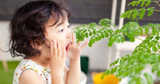 モリンガを寒い地域でも育てられる栽培マル秘テクニック